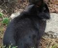 Babbel konijn  vrouwlijk