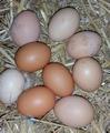 Scharrel eieren 10 stuks